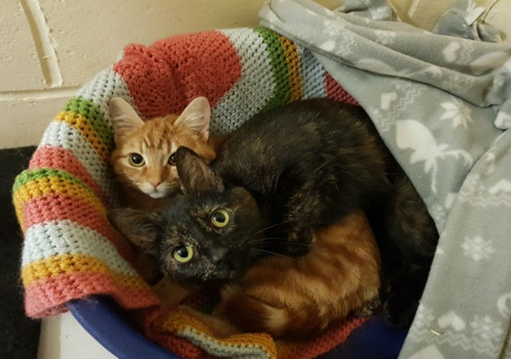 Bella and Lexi are looking for a new home (Scottish SPCA)