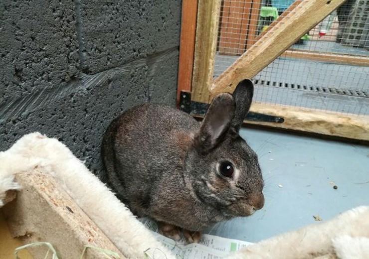 Thumper the rabbit (Scottish SPCA)