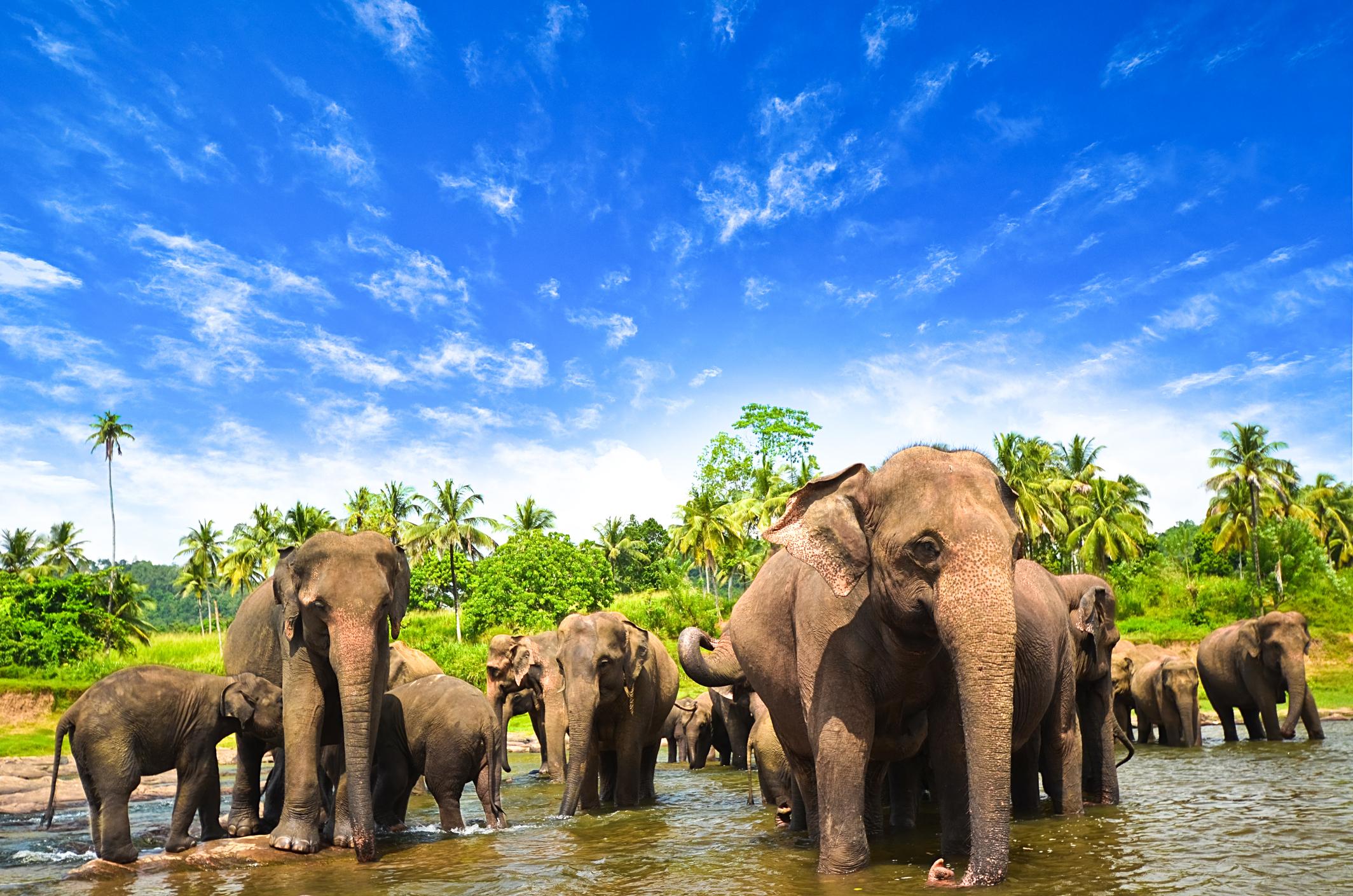 Elephants in the beautiful landscape of Sri Lanka (Getty Images)