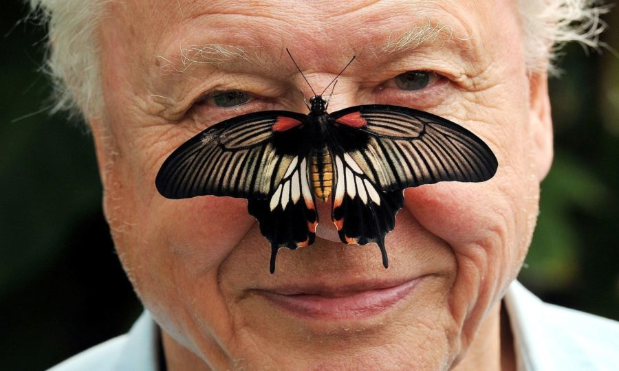 Sir David Attenborough says butterfly watching can soothe stress