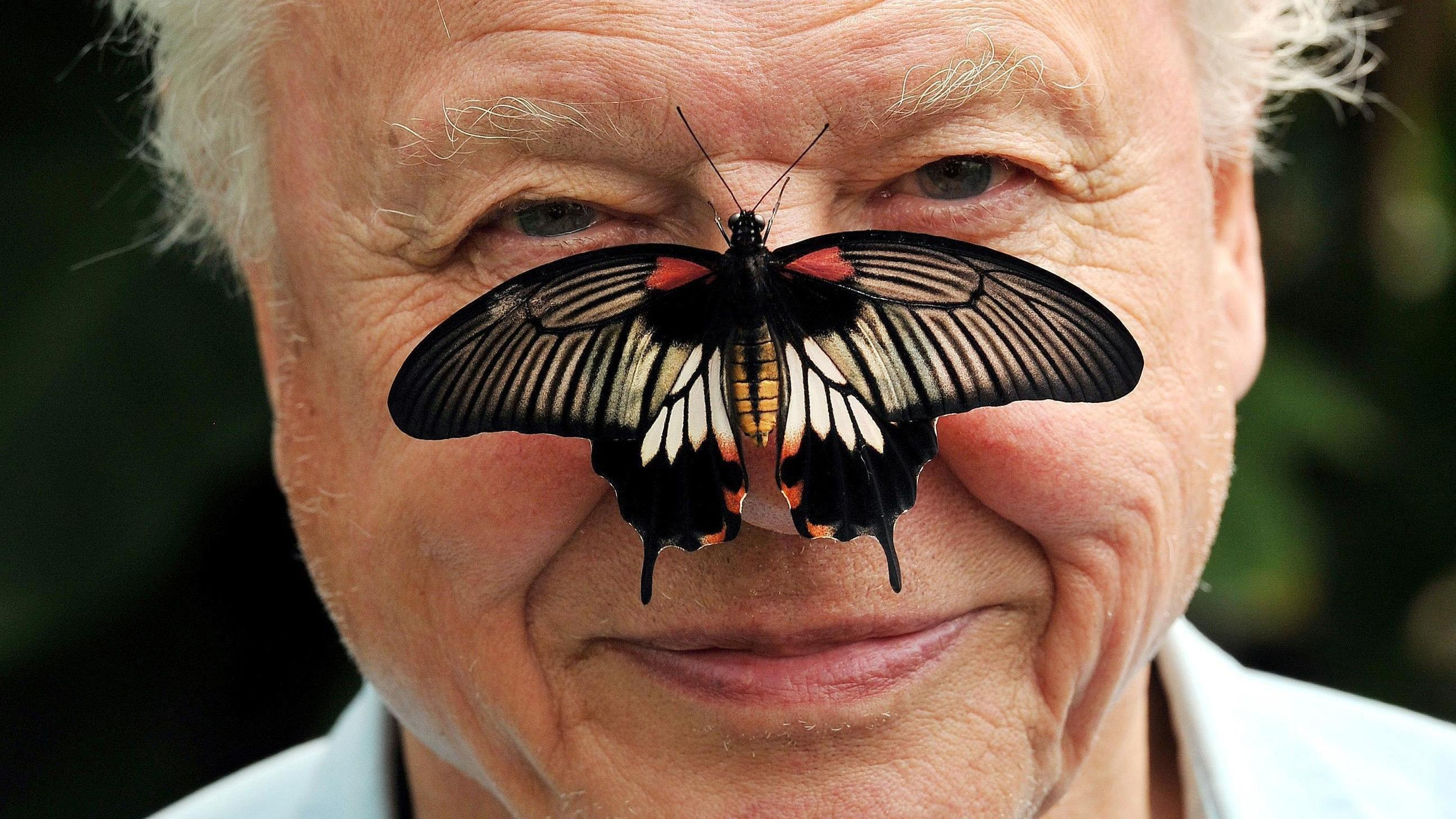 David Attenborough (Press Association)