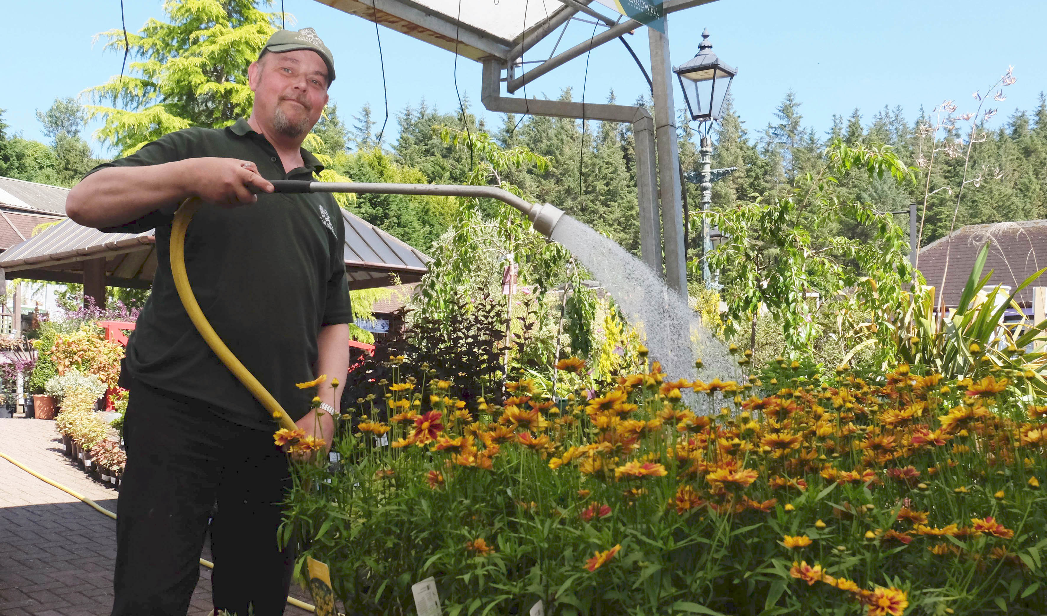 Brian Hawthorn watering plants in the shade at Cardwell Garden Centre