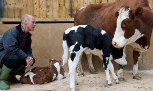 The Ethical Dairy, Rainton Farm.