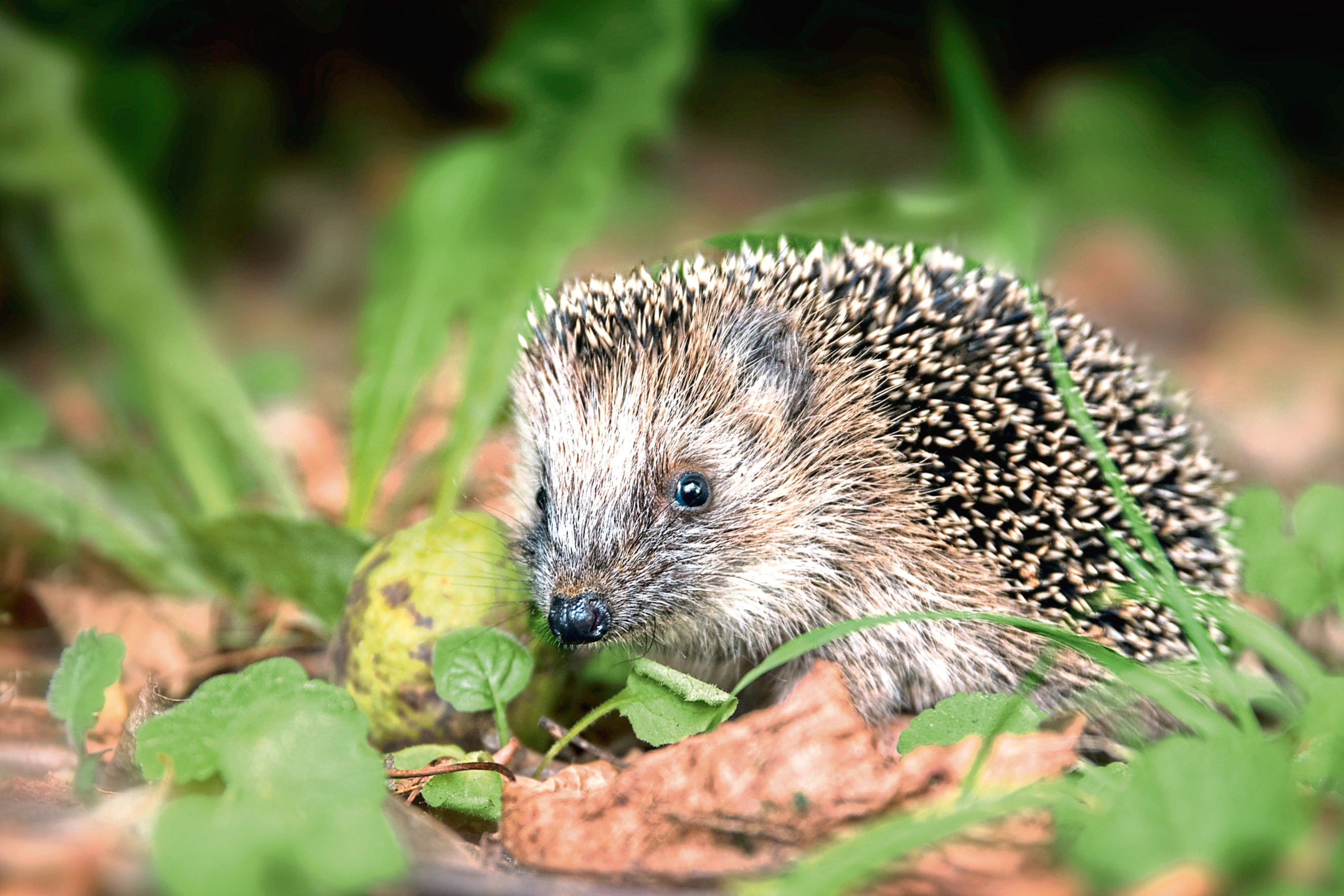 Sally Coulthard's book is a guide on how to help our ​prickly pals