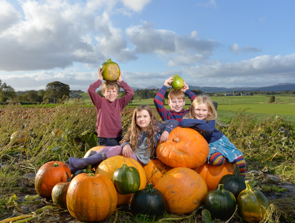 It's a pumpkin paradise at Arnprior Farm this October.