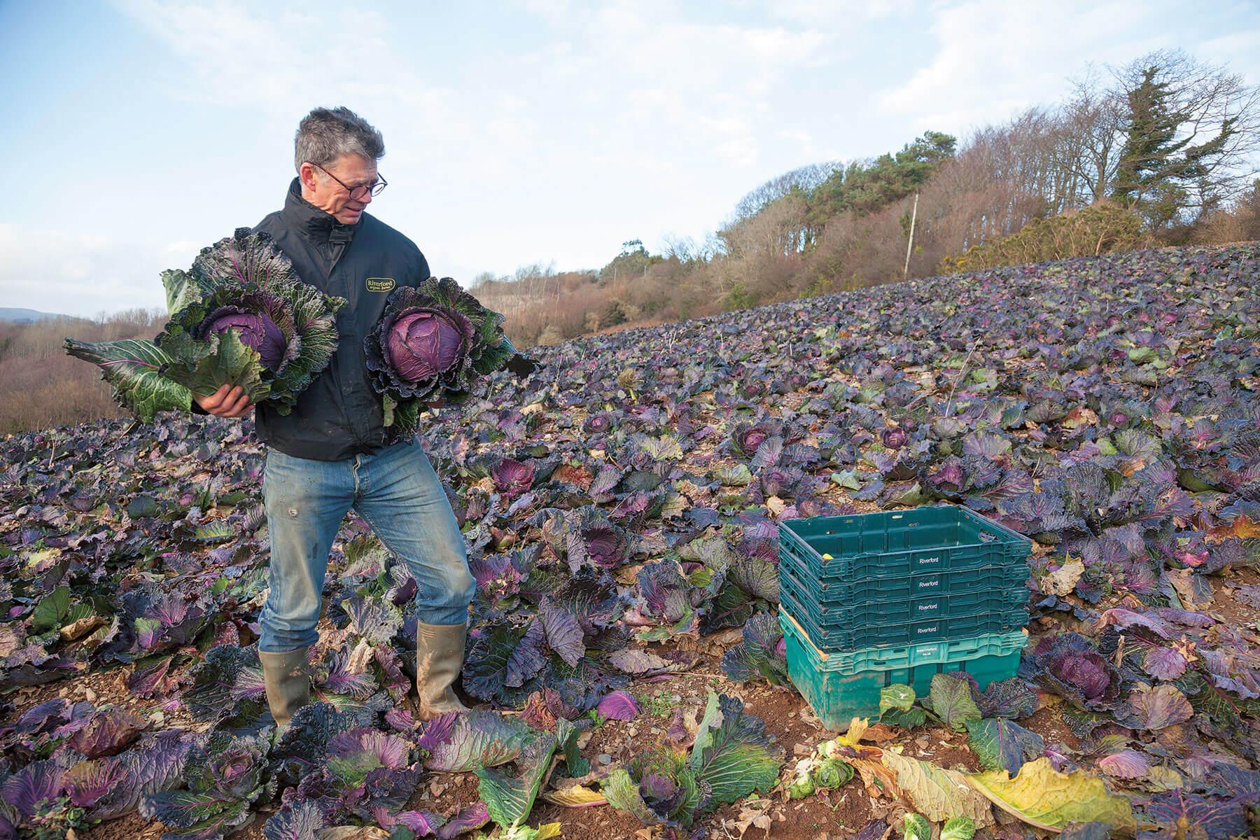 Riverford vegetable producers.