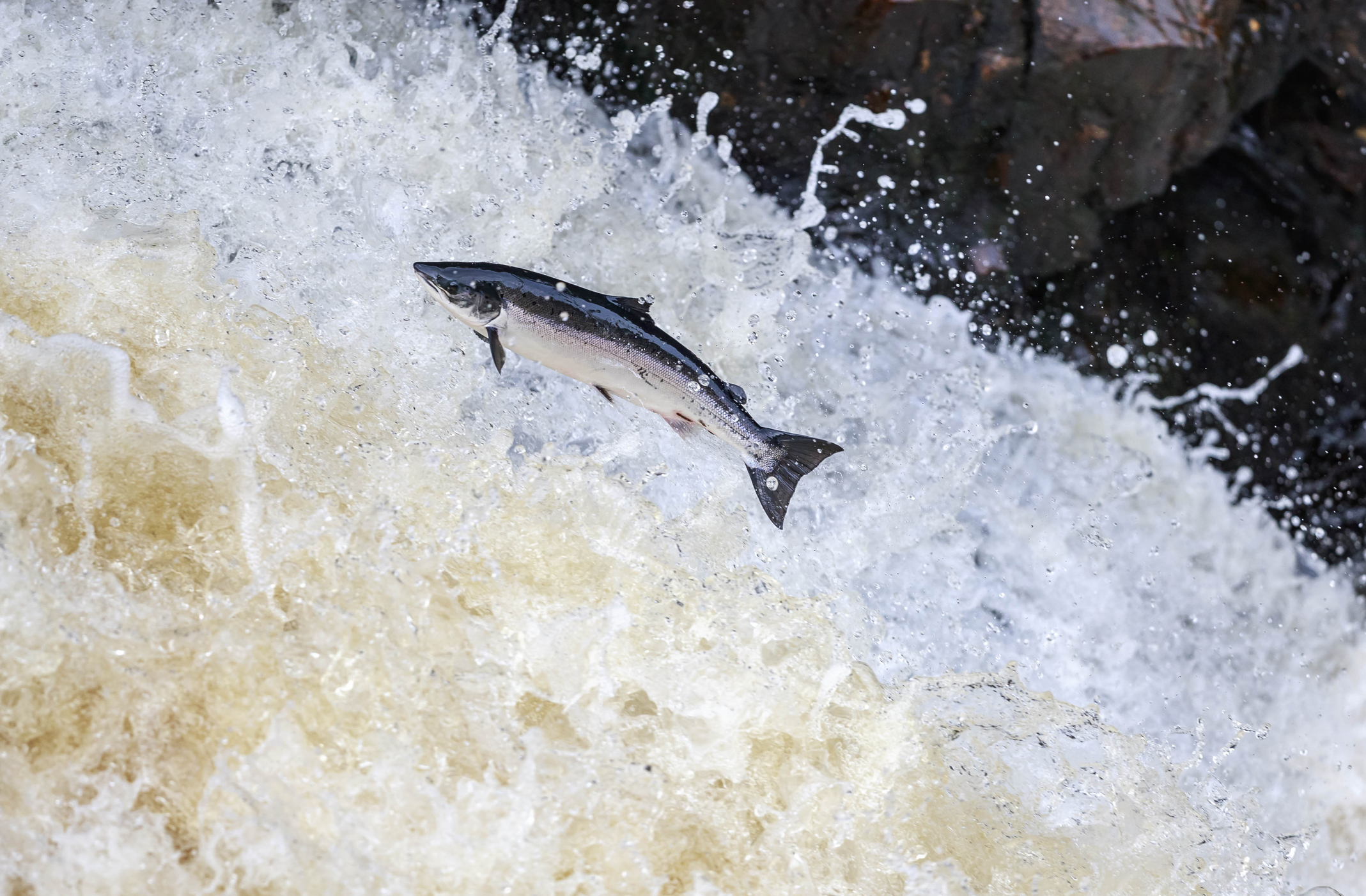 Experts fear for the future as once teeming rivers are now empty of fish (Getty Images)