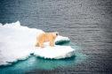 A polar bear in the Arctic