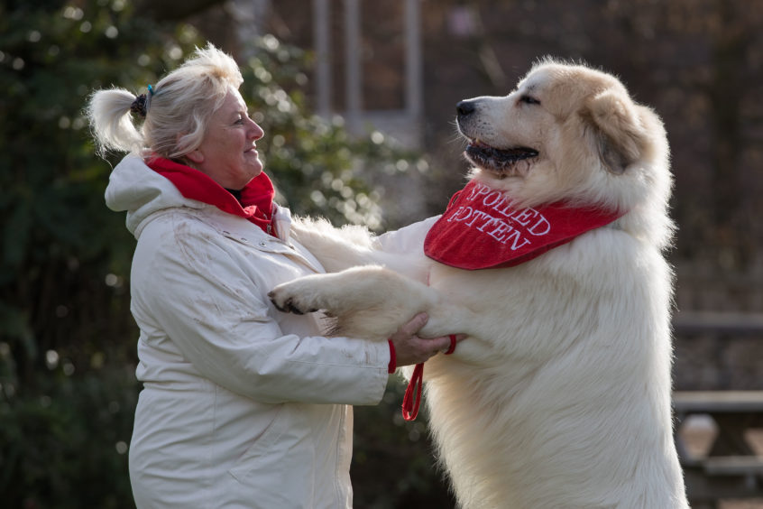 Susan Reilly and her Pyrenean Mountain Dog called Boris at the Birmingham National Exhibition Centre (NEC) for the second day of the Crufts Dog Show