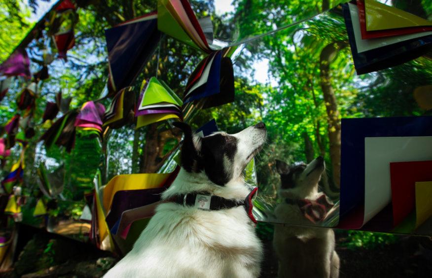 GALLERY: It's a dog's day out at Jupiter Artland, near Wilkieston, Edinburgh - Sunday Post