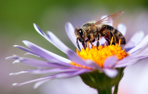 World Honey Bee Day: Why we should all be buzzing about our insect friends - Sunday Post