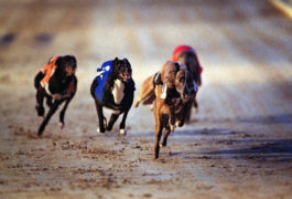 Dozens of dogs doped at Scots greyhound track