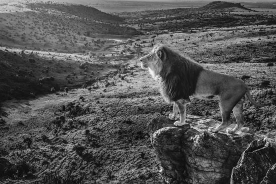 David's image of a lion on Pride Rock is a composite of two images, recreating the iconic scene of Simba in The Lion King