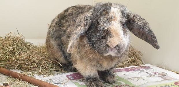 Pet of the Week: Could you give Rhubarb the rabbit a brand new forever home? - Sunday Post