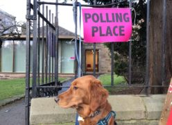 #dogsatpollingstations is back.